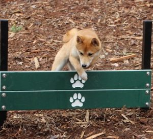 dog jump dog park