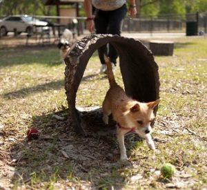 dog park tunnel